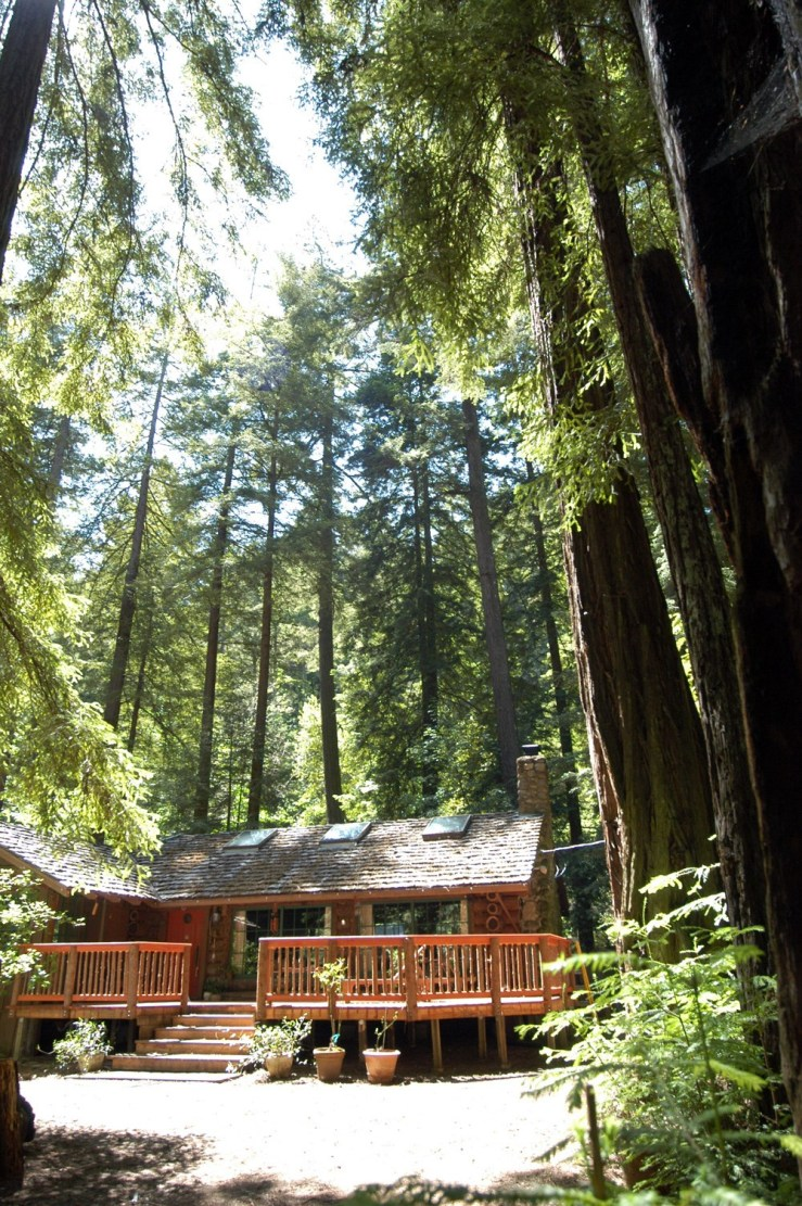 photograph of Asa's cabin nestled among the towering redwood trees