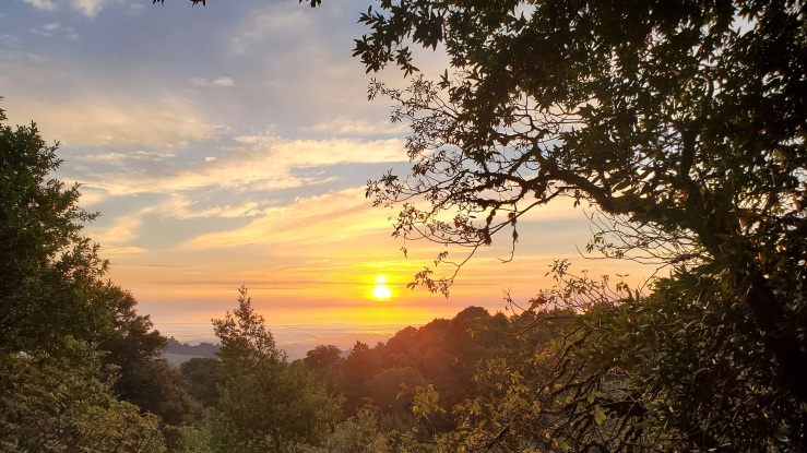 Photograph looking through trees, across the foothills of the Santa Cruz Mountains to the sun setting over the Pacific Ocean