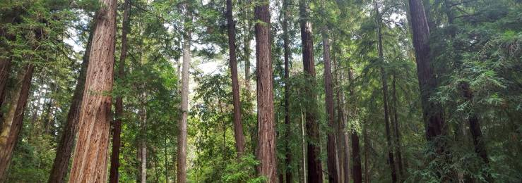 Big and tall trees in Asa's front yard